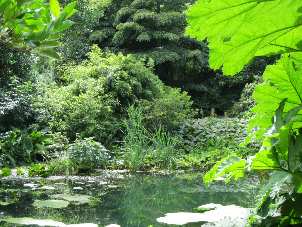 The Pond and Water Garden