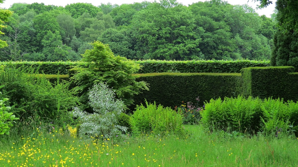 View over hedges