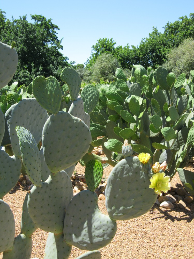 The Prickly Pear Maze
