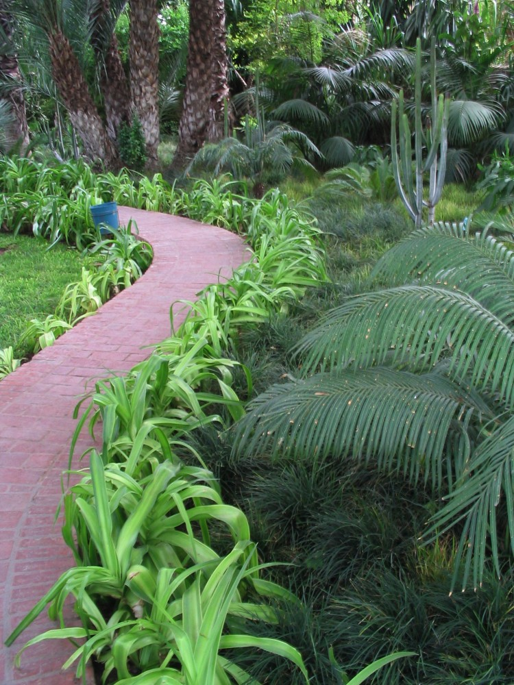 Path to the palm grove