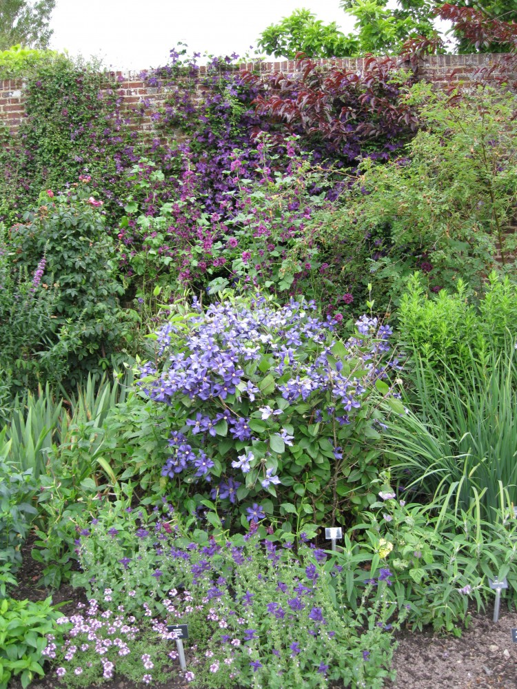 The Long Library Courtyard – Purple Border