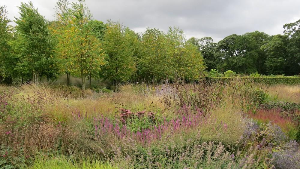 The Perennial Meadow
