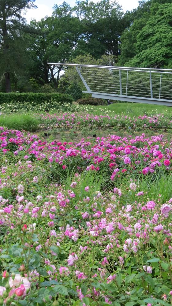 Savill Rose Garden
