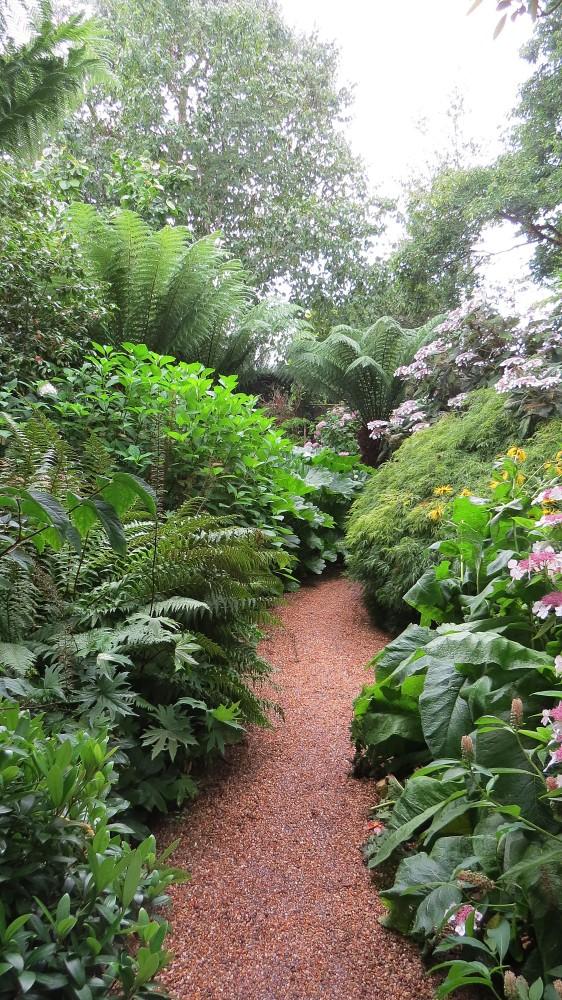 Tree Fern Garden