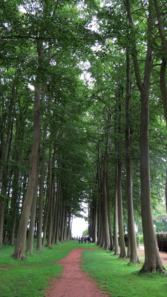 The Beech Allee