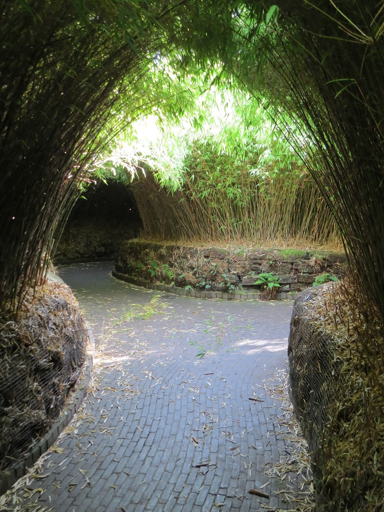 The Bamboo Labyrinth