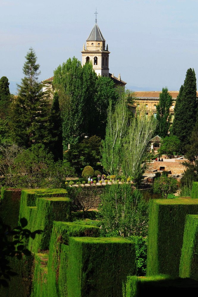 The Generalife's Clipped Juniper 'Battlements'