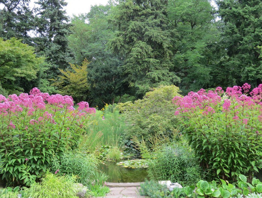 Karl Foerster Garten The Unfamiliar Pioneer The Garden Visitor