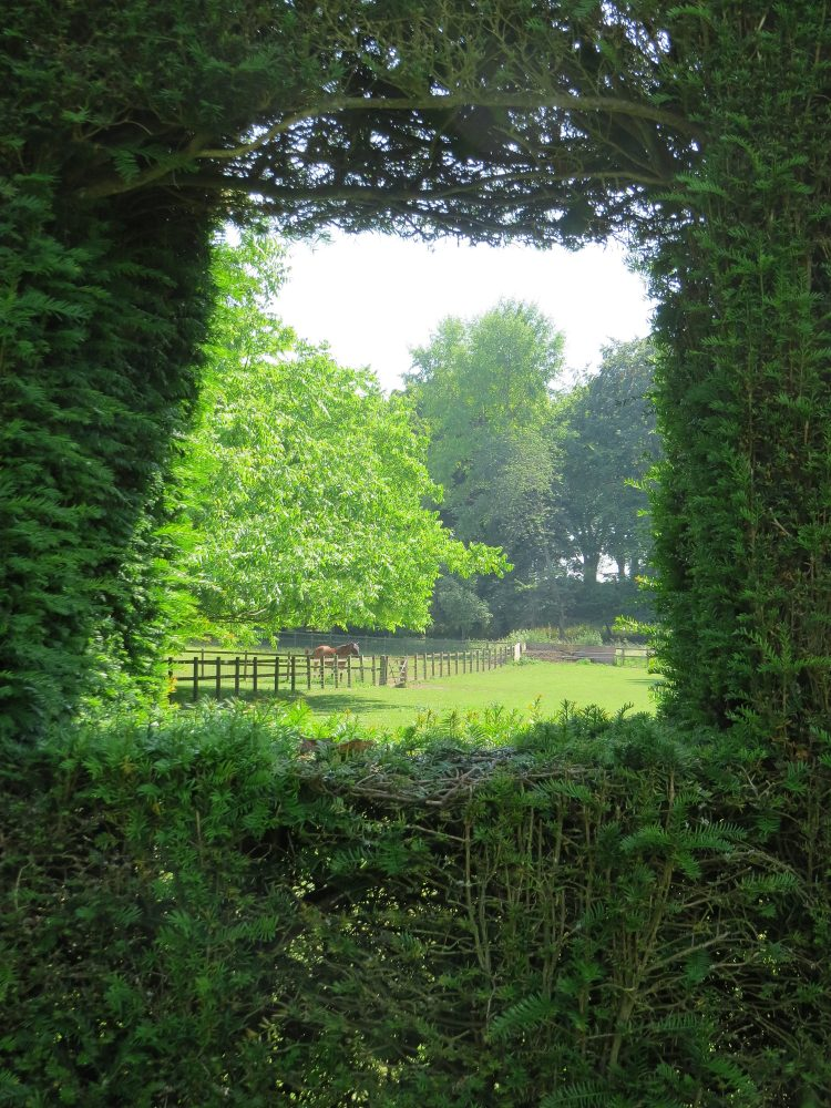 Borrowed View through the Yew Hedge