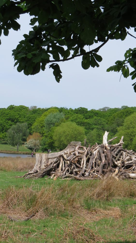 Dead Wood Left to Encourage Wild Life