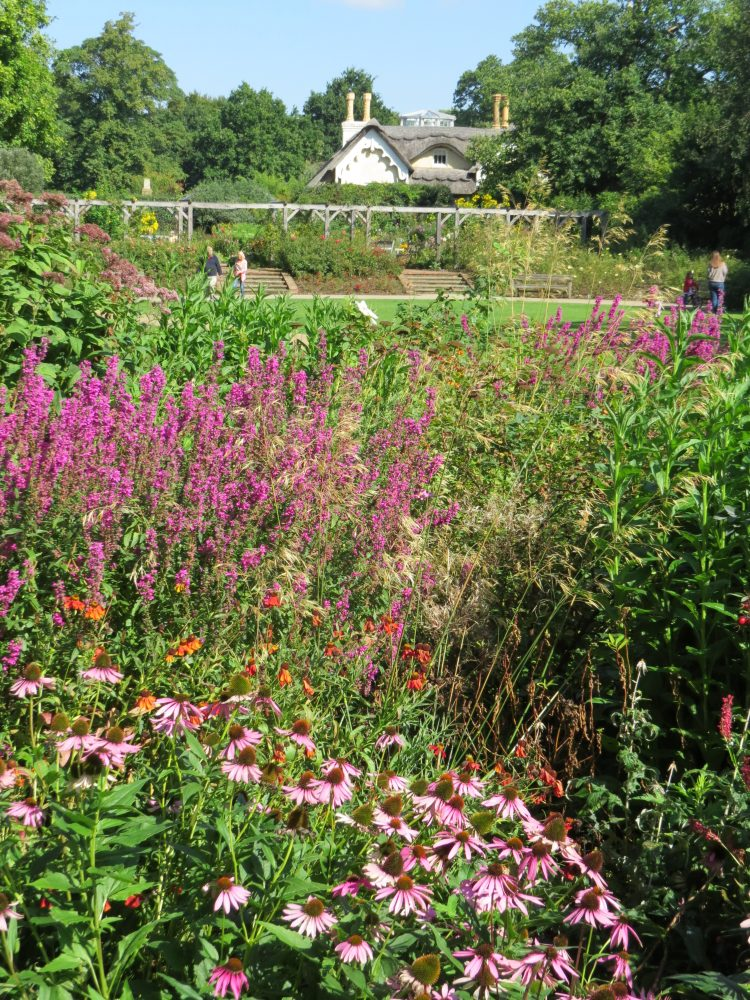 Pembroke Lodge: Perennial Beds Looking Towards the Rose Garden