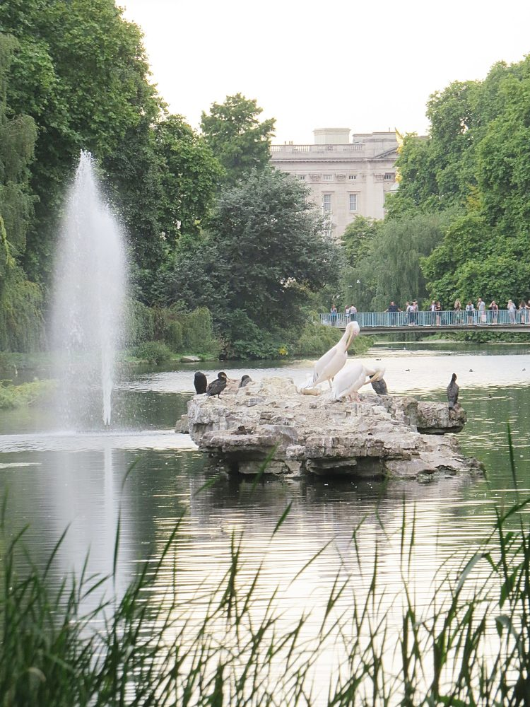 Pelicans and the Swire Fountain