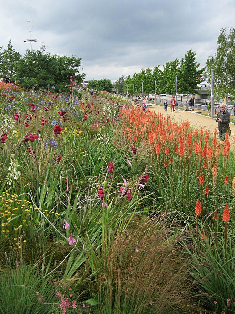 2012 Gardens – The South African Garden 2012