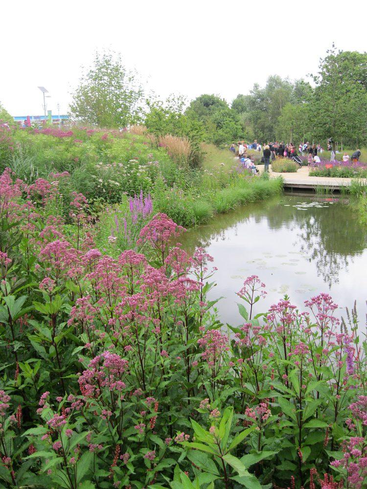 North Park Wetlands 2012