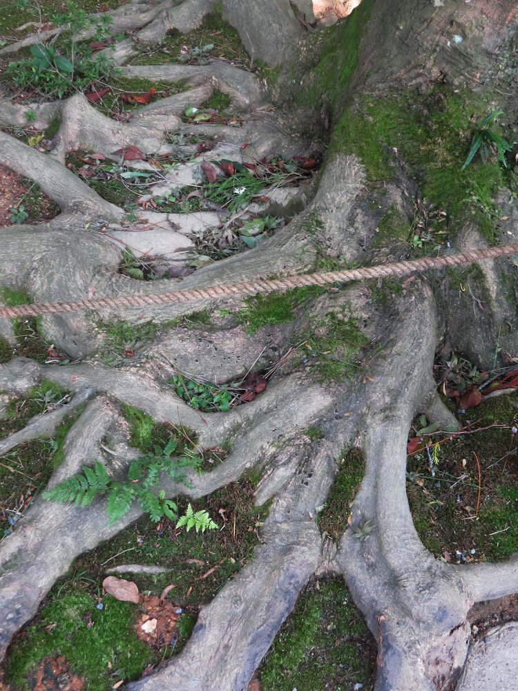 The Water Garden: Tree Roots