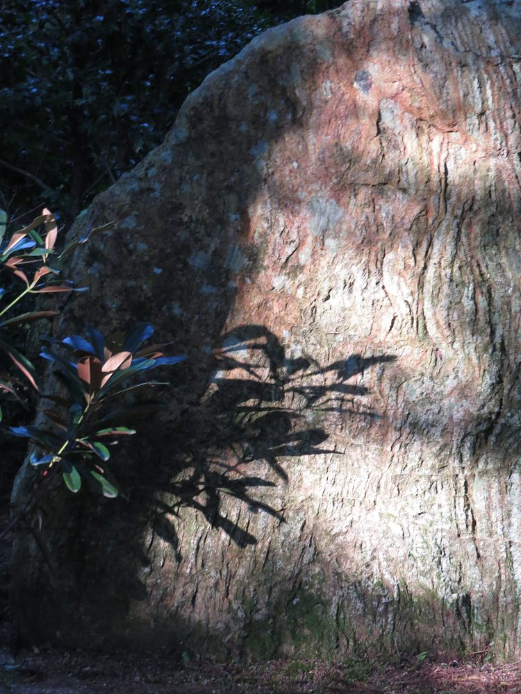 The Water Garden: Rock: Light and Shade