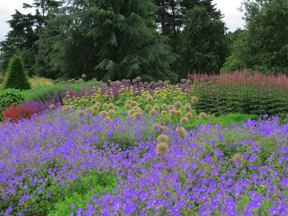 Bed 1 – Well-Proven Cultivars - June