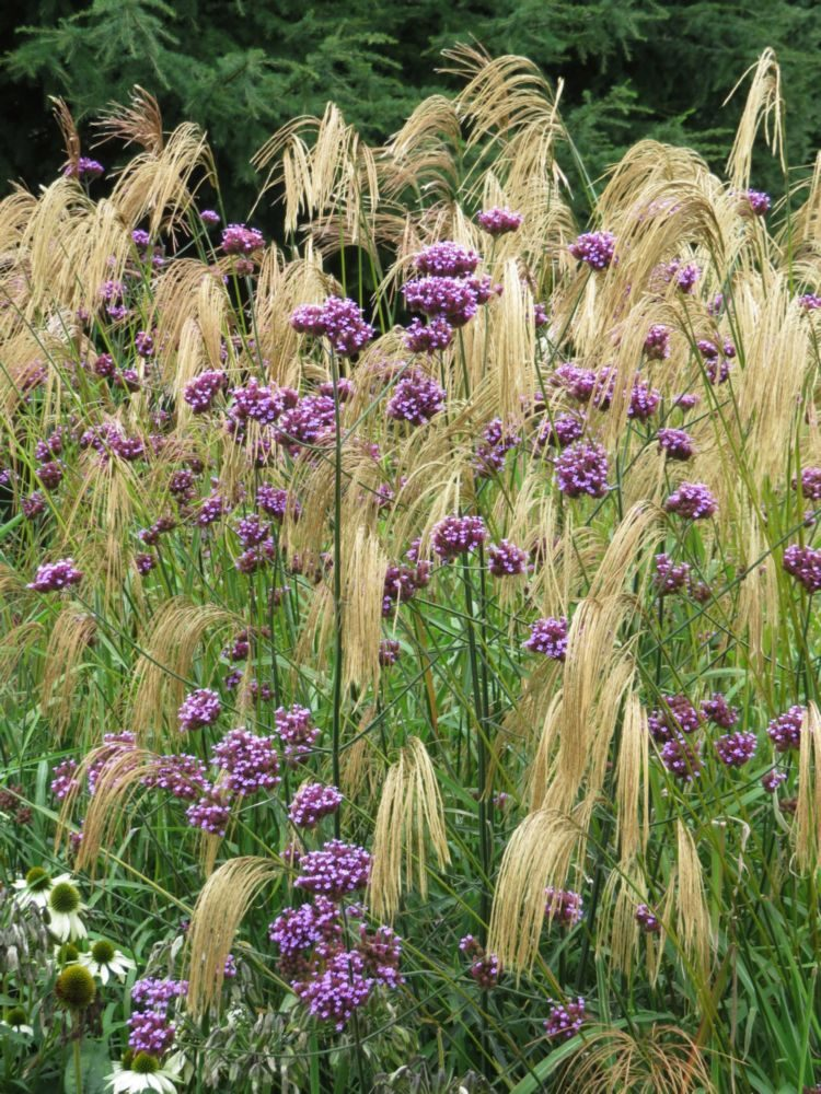 Bed 5 – Bee-Friendly Plants – September