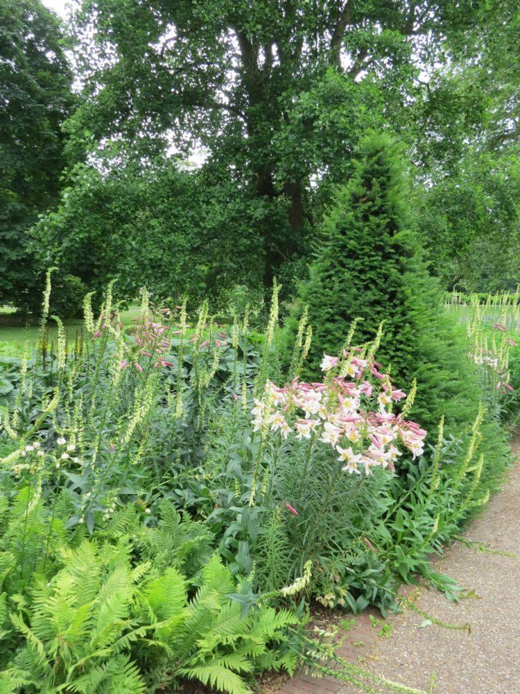 Beds 6-8 – Shade-Loving plants - June