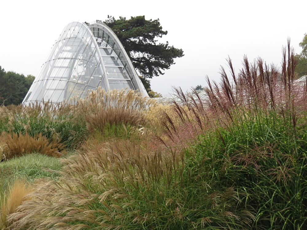 October – The Grass Garden and Davis Alpine House, and also the Salvia Collection