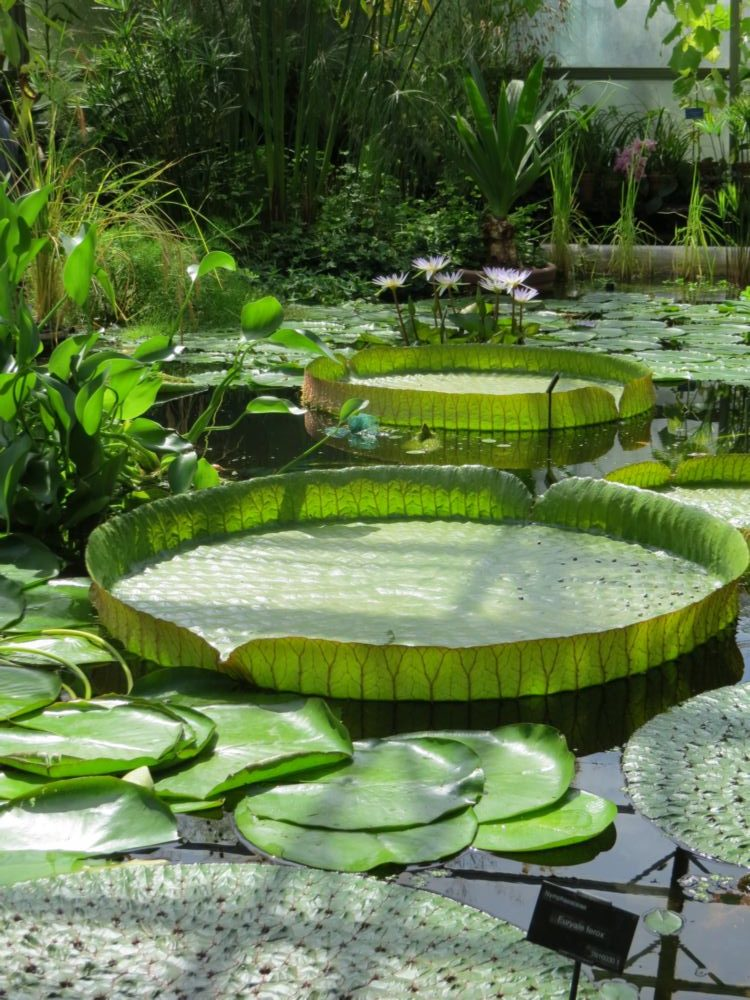 January – The Water Lily House, and also the Winter Garden and 'The Old Lions' – Kew's Heritage Trees.