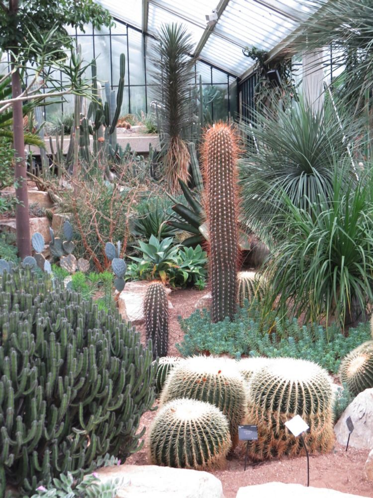 February - The Princess of Wales Conservatory (Desert Garden) – and also the Orchid Festival, the Hamamelis collection, and Crocus Plantings.