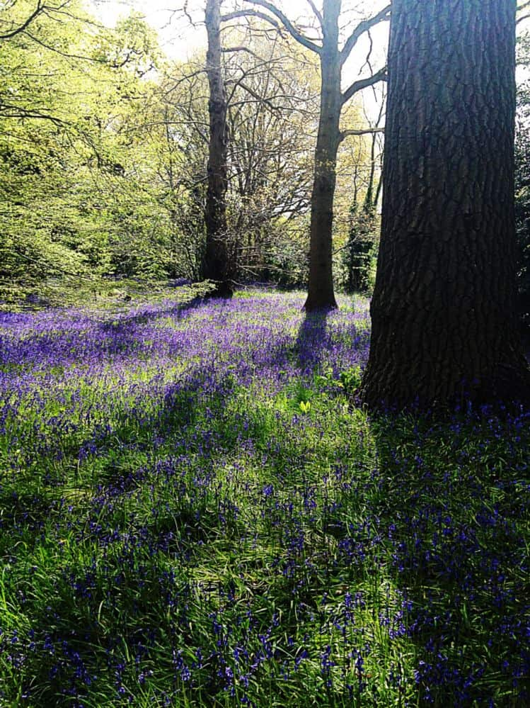 May – English Bluebells to the Native Woodland around Queen Charlotte's Cottage, and also The Cherry Collection and Temperate House.