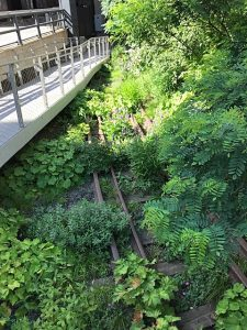 Elevated Walkway Over Planted Railroad Tracks