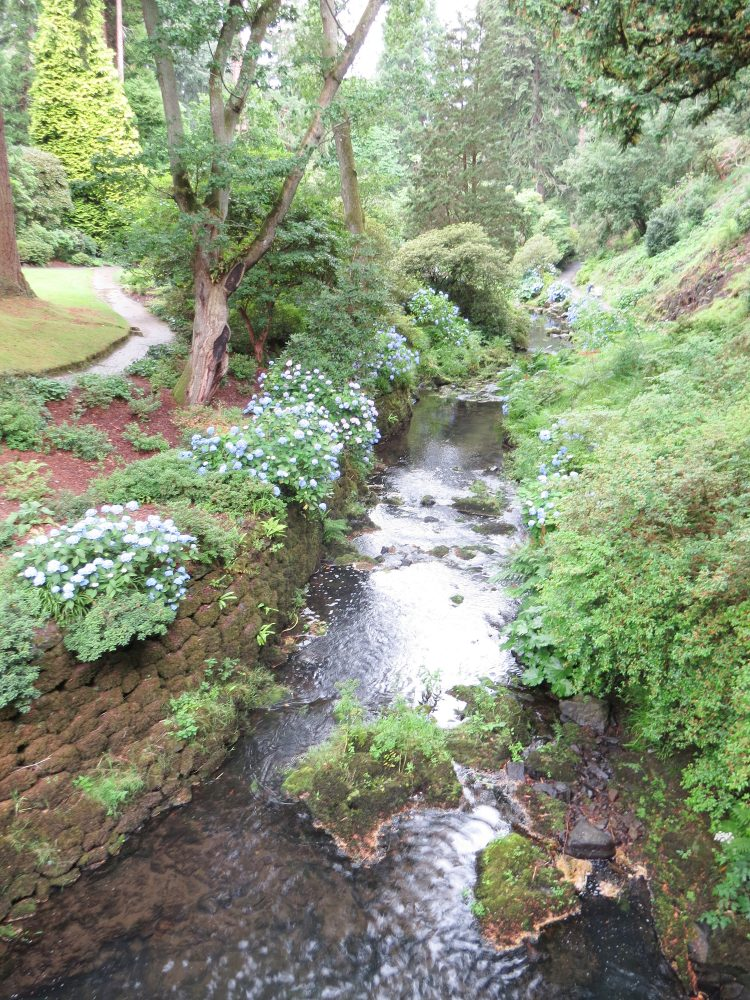 Hydrangeas and Lawns to The Dell
