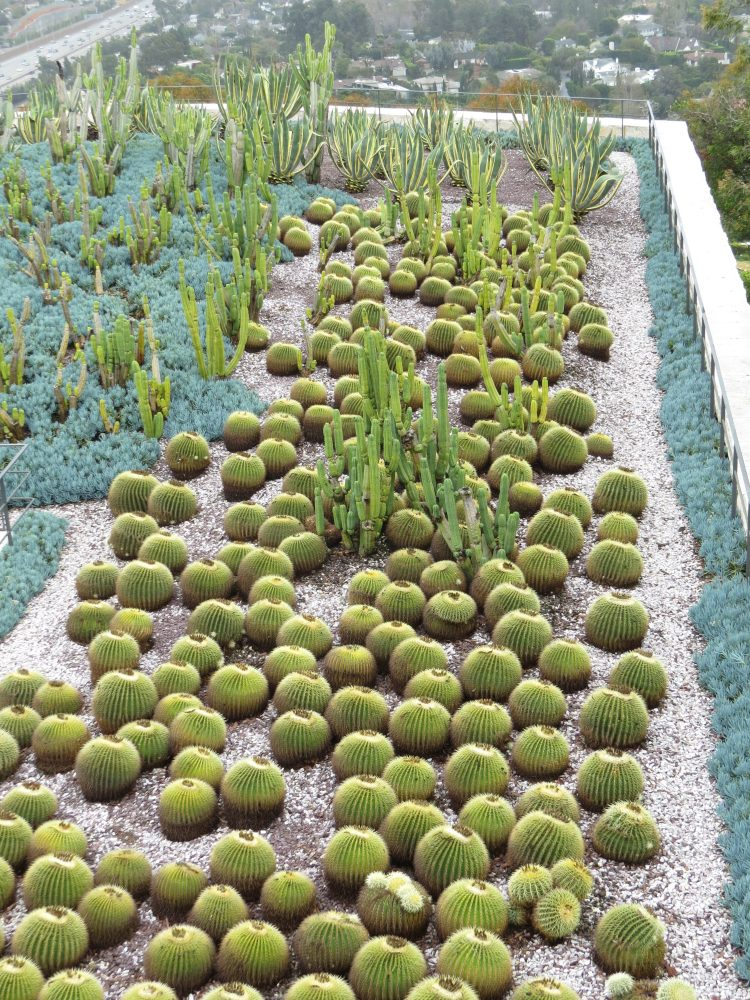 South Promontory Cactus Garden