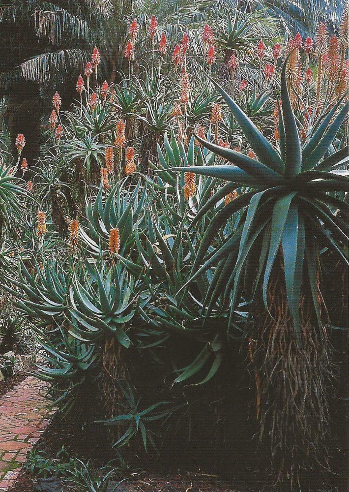 The Aloe Garden