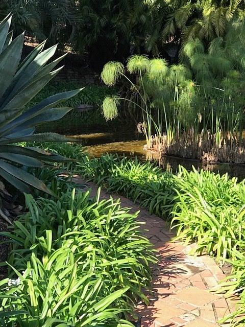 Water Garden – Mass Planting of Agapanthus